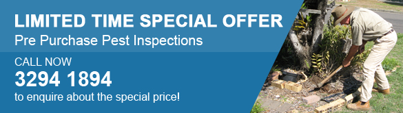 Eclipse Pre-Purchase Pest Inspection Special Offer